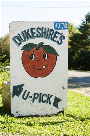 Dukeshire Apples